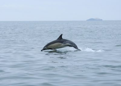 dolphine use