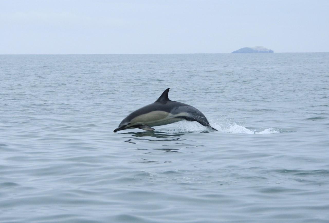 Pembrokeshire boat tours